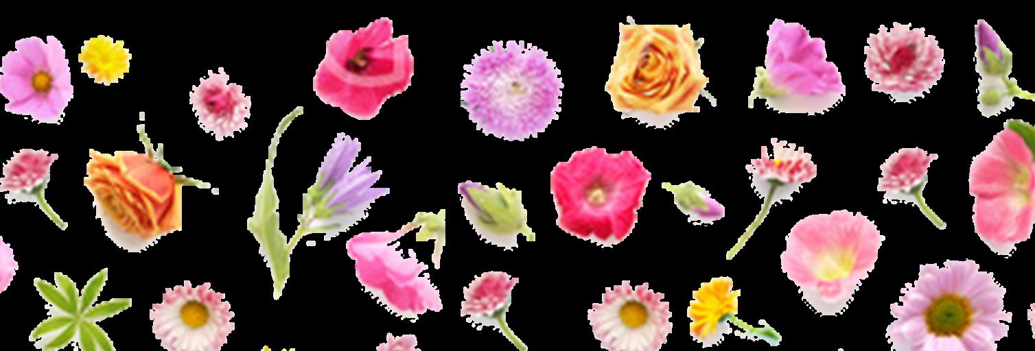 花あふれるふくおか