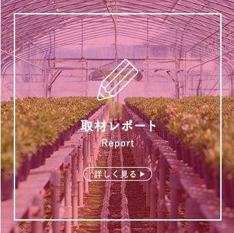 取材レポート